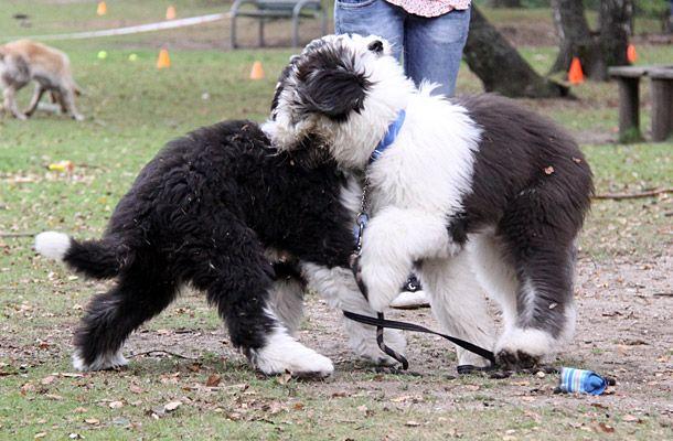 Pups Jaimy en Waylon