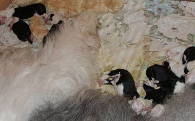 10 pups geboren bij aus dem Elbe-Urstromtal