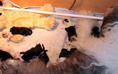 9 pups voor Elbandita aus dem Elbe-Urstromtal