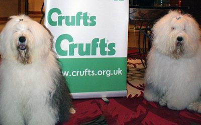 Crufts 2013: Beste reu is Sweet Expression's Meet & Greet