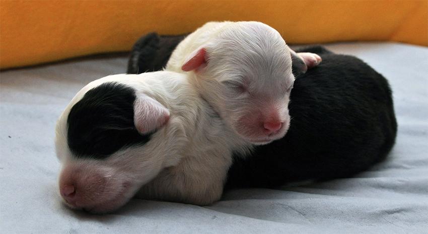 Een wonder: pups geboren uit Kassenknüller (1980)