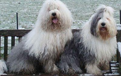 Half april worden er pups verwacht bij Hillbilly Heights