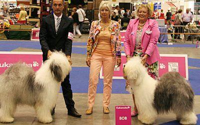 Nederlandse successen op de Europese Hondenshow in Geneve
