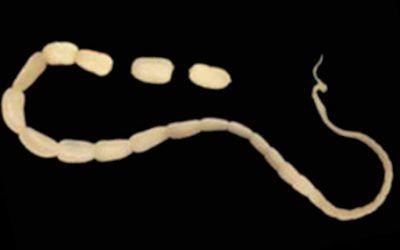Onderzoek naar noodzaak tot ontwormen