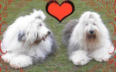 Puppies verwacht in januari bij Takoda Kyona