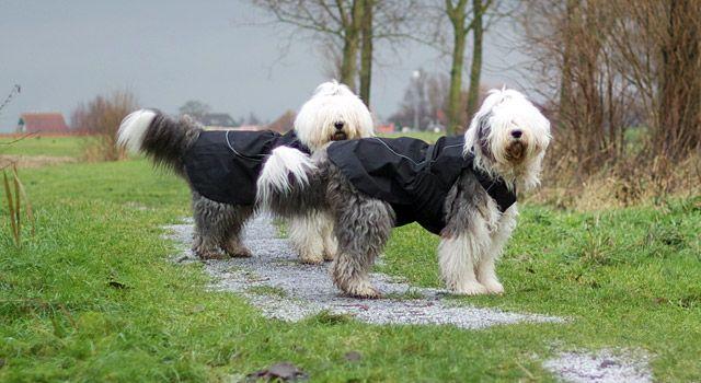 Regen? Geen probleem meer met een honden regenjas
