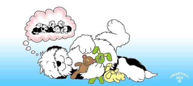 Schijndracht bij honden