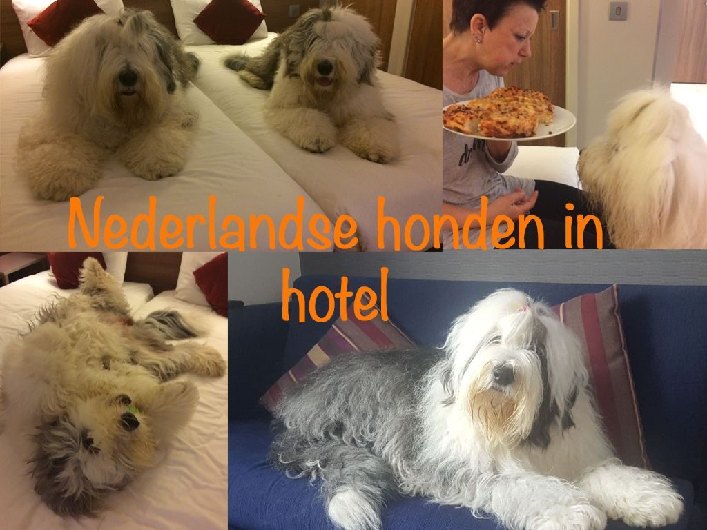 Nederlandse honden in het hotel
