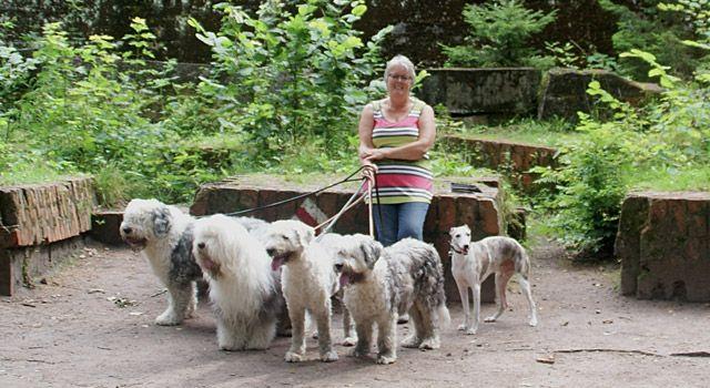 Op vakantie met 4 Old English Sheepdogs en een Whippet