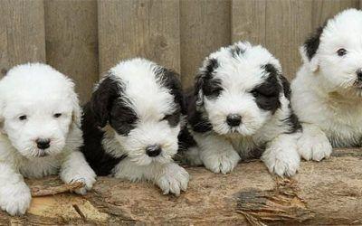 Pups verwacht bij Law of Love