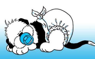 Op zoek naar een Bobtail pup?