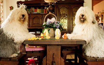 Sarah en Sophie op de voorpagina van het Algemeen Dagblad